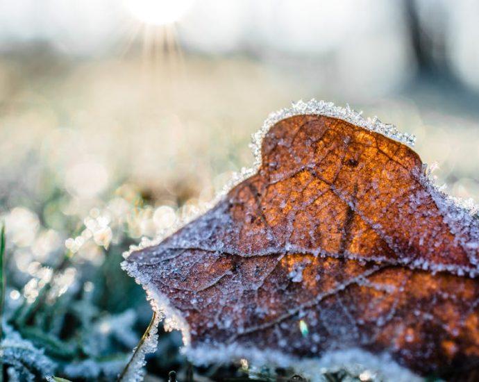 ochrona roślin zimą